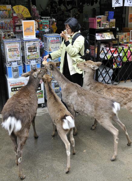 Nara_KLO_Deers_002_April_2010
