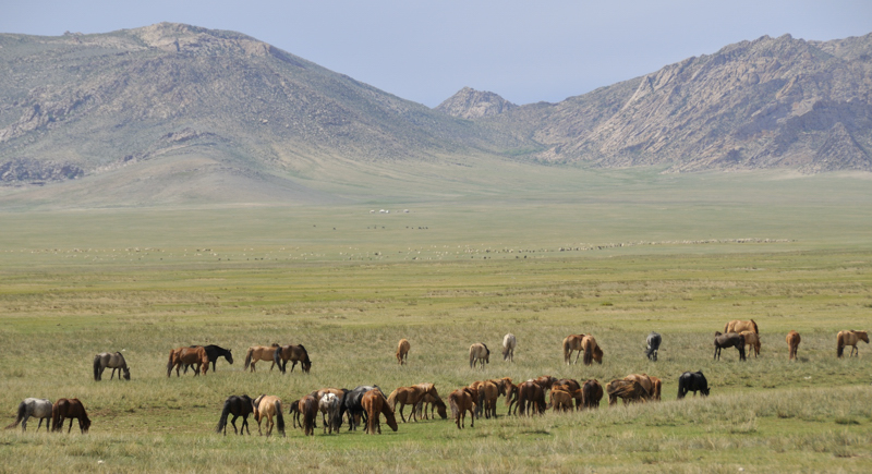 Horses on steppe