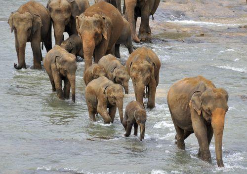 Elephants_004
