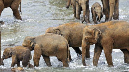 Elephants_005