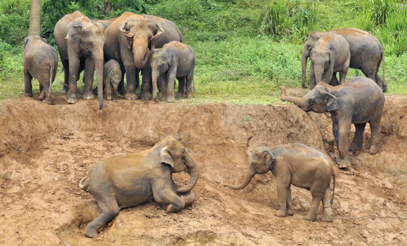 Elephants_002