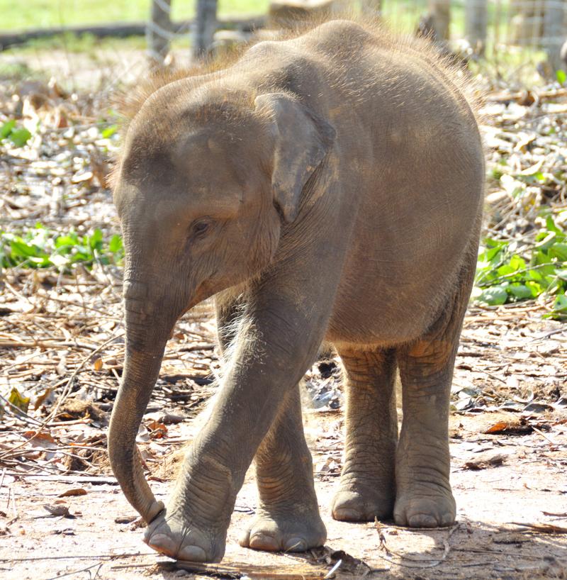 Elephants_009