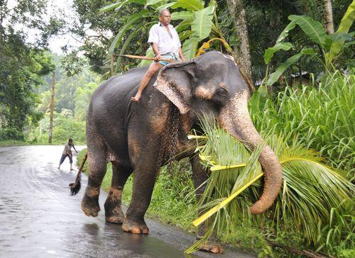 Elephants_010