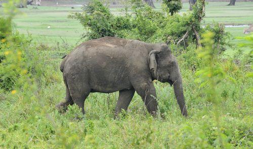 Elephants_012