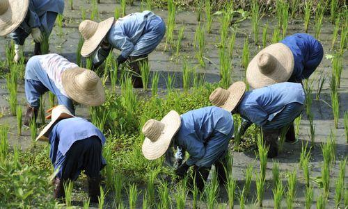 Rice Farmers_01