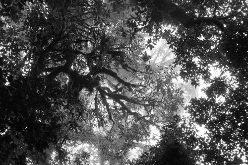 Canopy_BW