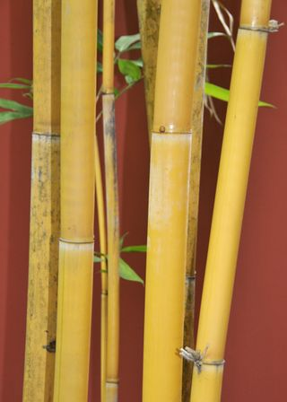 Hotel_Yelloe Bamboo