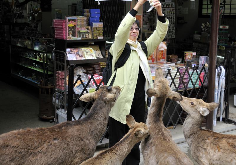 Nara_KLO_Deers_001_April_2010