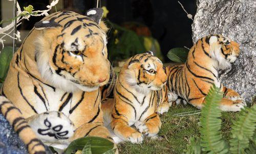 HCM_Tigers_003