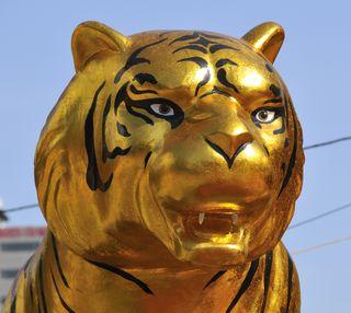 HCM_Tigers_002