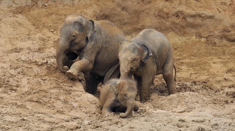 Elephants_003