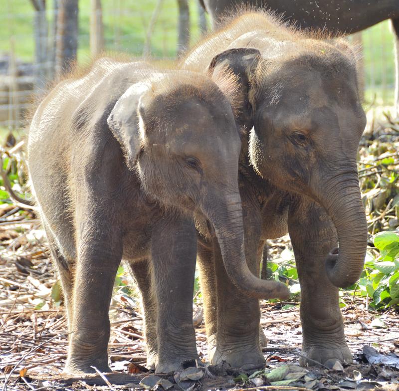 Elephants_008