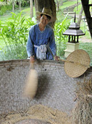 Rice Fan